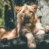 secret-garden-sigfried-roy-tracy-lee-lions-tiger-cubs-dolphins-103