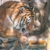 secret-garden-sigfried-roy-tracy-lee-lions-tiger-cubs-dolphins-106