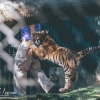 secret-garden-sigfried-roy-tracy-lee-lions-tiger-cubs-dolphins-133