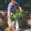 secret-garden-sigfried-roy-tracy-lee-lions-tiger-cubs-dolphins-137