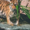 secret-garden-sigfried-roy-tracy-lee-lions-tiger-cubs-dolphins-140