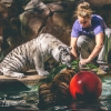 secret-garden-sigfried-roy-tracy-lee-lions-tiger-cubs-dolphins-142