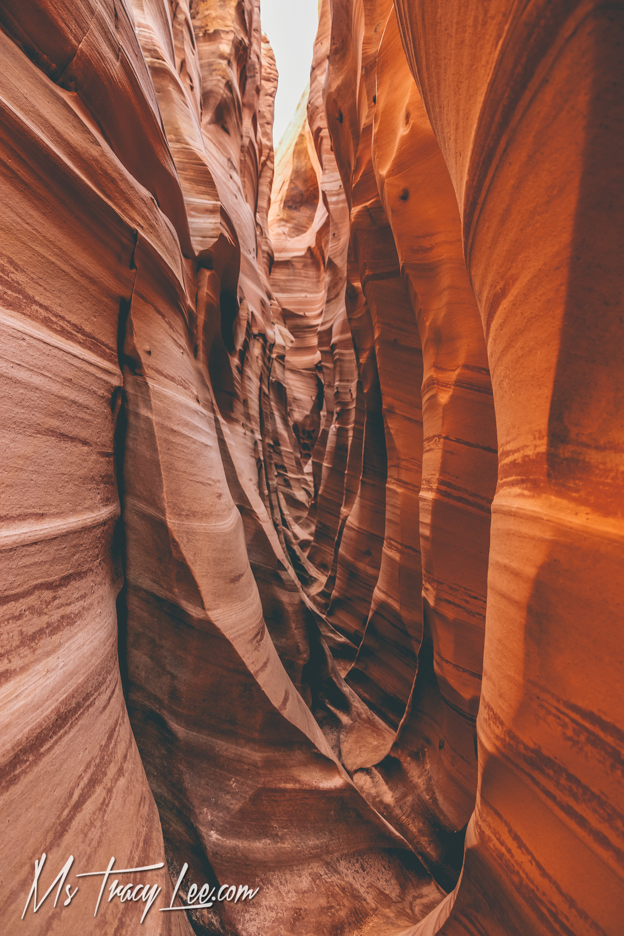 Spontaneous Zebra Canyon Adventure