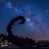 anza-borrego-springs-milky-way-sculpture-dragon-serpent-106