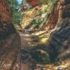 canyoneering-subway-zion-top-down-utah-rappelling-158