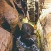 canyoneering-subway-zion-top-down-utah-rappelling-202