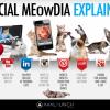 social_media_explained4-800x457_0