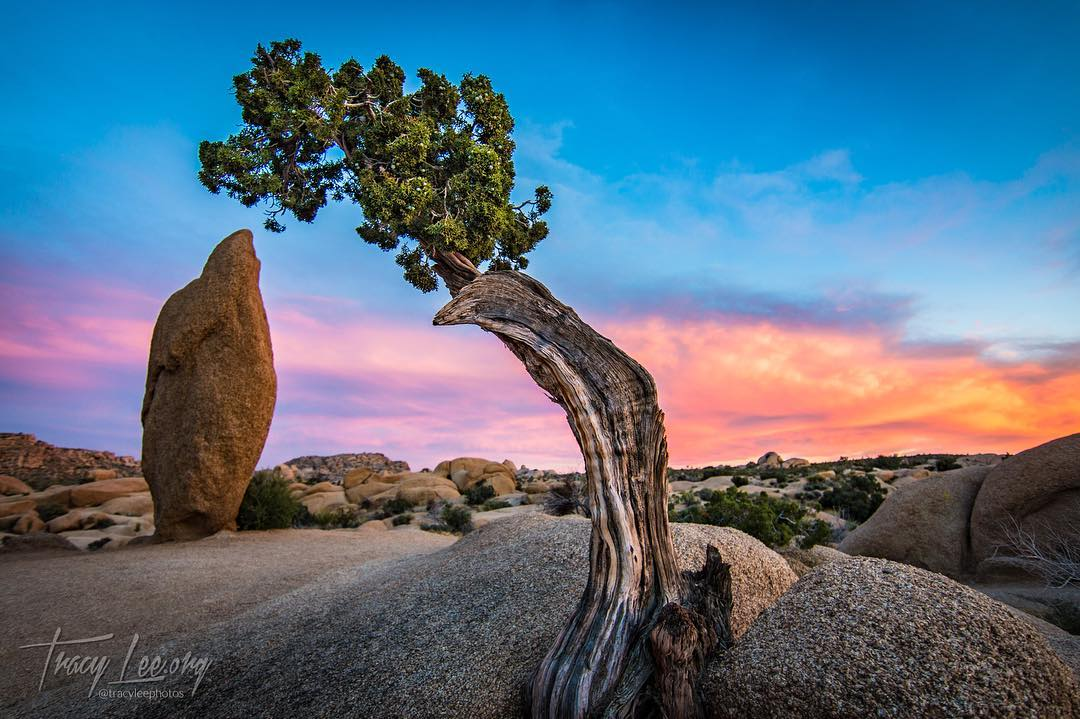 I was in Joshua Tree…